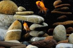 Скинали золотые рыбки среди камней на черном фоне с пузырьками
