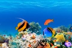 Скинали подводный мир, акула