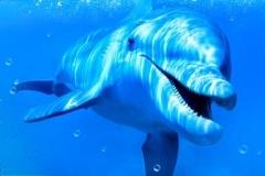 Скинали дельфины под водой
