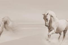 Скинали лошади