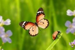 Скинали бабочки на луговых цветах