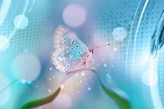 Скинали бабочки на голубом