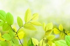 Скинали зеленые листья