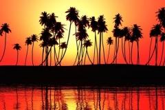 Скинали пальмы на закате