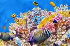 Скинали подводный мир