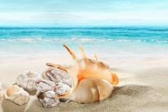Скинали ракушки на морском берегу