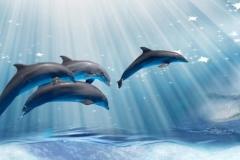 Скинали дельфины и лучи солнца