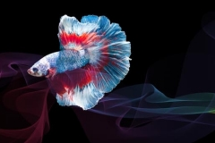 Скинали красивые рыбки и абстракция на черном