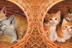 Скинали милые котята