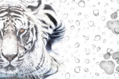 Скинали тигры и капли воды, следы тигра