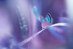Скинали бабочки на лугу, нежные листья