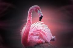 Фламинго для скинали и кухонных фартуков