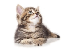 Скинали игривые котики