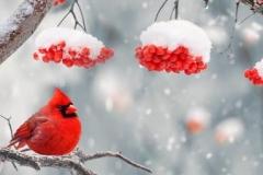Скинали красные птички и красная рябина зимой