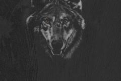 Скинали волки и тигры на черном фоне