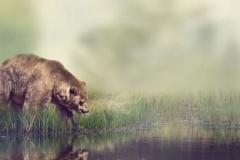 Скинали медведи, львы и тигры