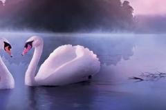 Скинали лебеди на рассвете