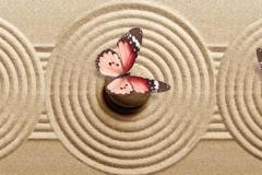 Скинали бабочки на песке с кругами