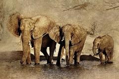 Скинали африканские мотивы, лев, слоны